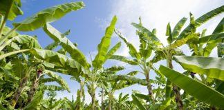 Rolnictwo i industrializacja w Afryce